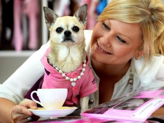 chihuahua with tea cup and lady