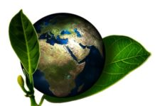 world in a plant leaves environmentally friendly