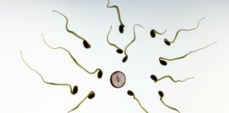 sperm and egg fertility and nutritional factors