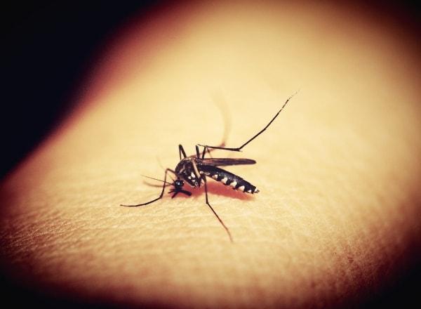 malaria-mosquito-biting-skin