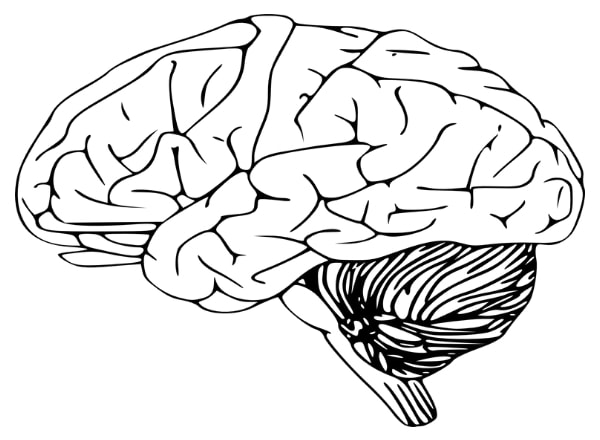 sketch-of-brain