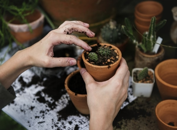gardening-for-postnatal-depression