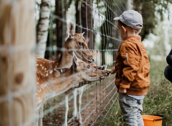 child-feeding-deer
