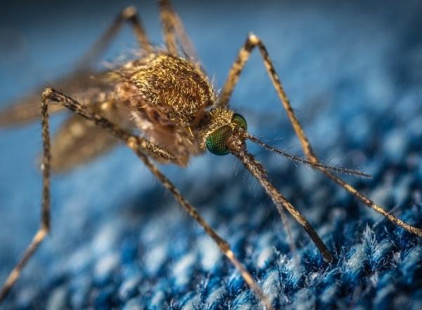 mosquito-biting-through-clothing