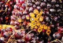 palm-oil-palm-olein-fruit