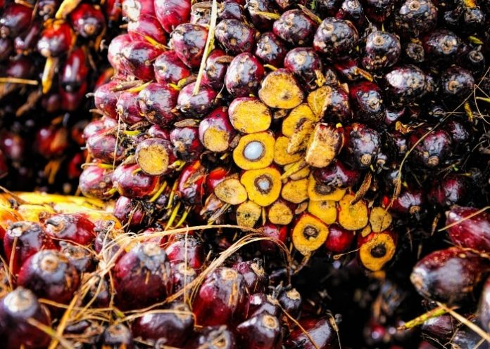 palm-oil-palm-olein-fruit