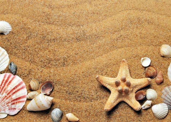 sea-shells-at-the-beach