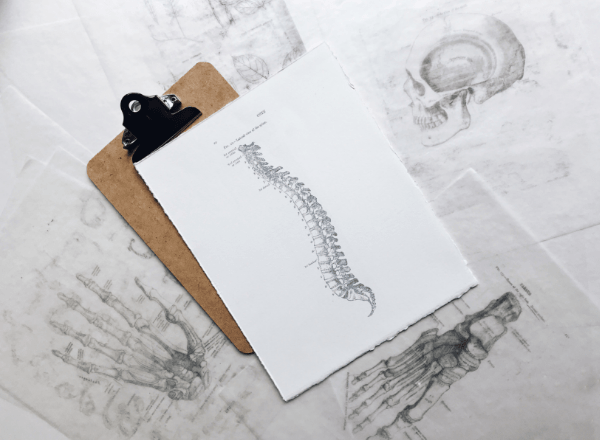 drawing-of-babys-spine