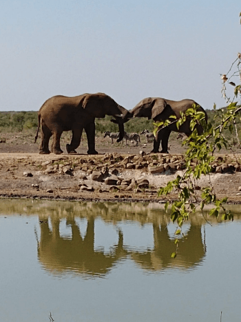 elephants-at-watering-hole-at-tau-game-lodge