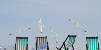 Sun chairs at the beach with seagulls
