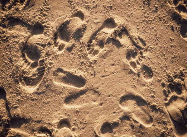 Parent and child footprints in beach sand