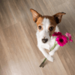 Cute dog with pink flower in its paws