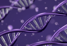 Three strands of human DNA on purple background
