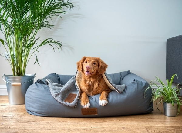 prepare your pet for your new baby