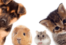dog cat pets: How much to pay your pet sitter